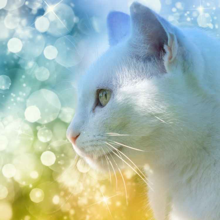 Spiritual Meaning of a White Cat