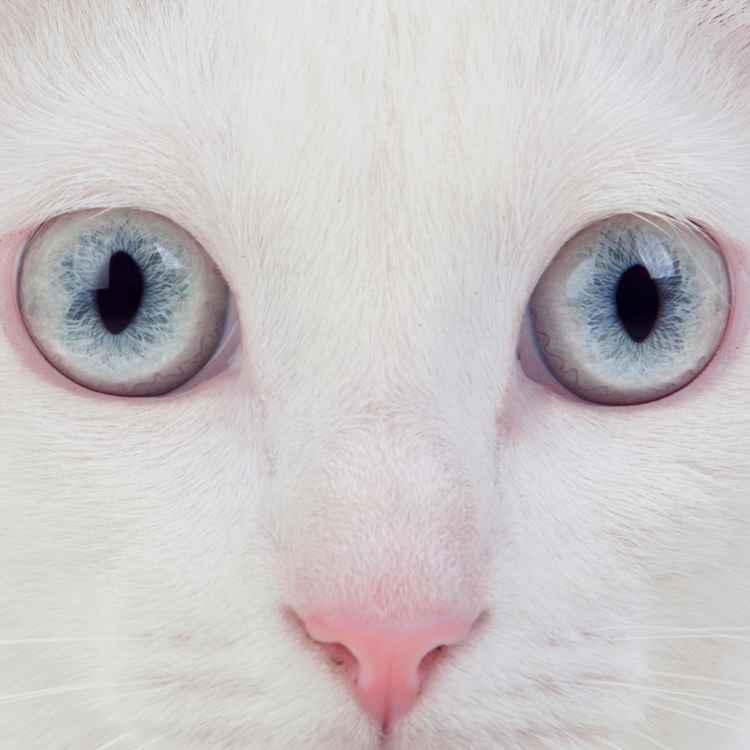 White cats and femininity