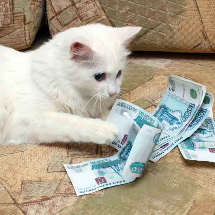 White cats and money