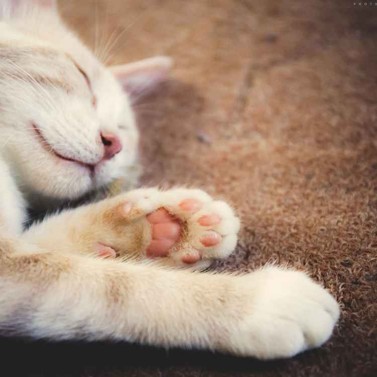 dreaming about a white cat