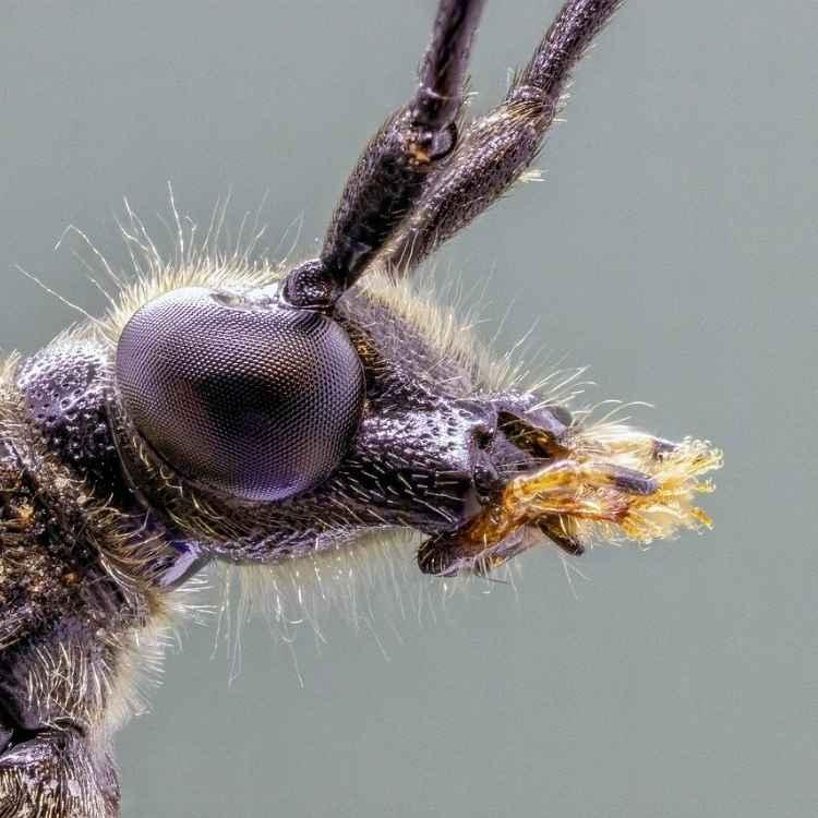 insect symbols in dreams