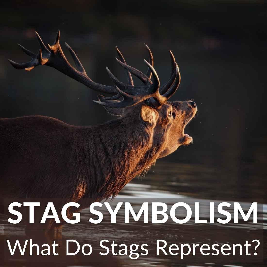 stag symbolism