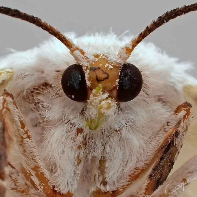 moth dead meaning